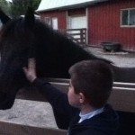 zoo horse