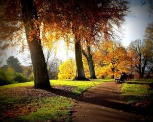 autumn_scene2