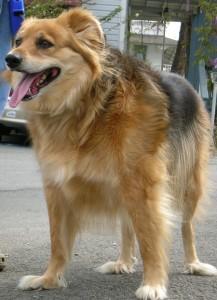 dog on leash 2
